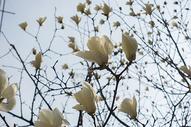 盛开的花图片