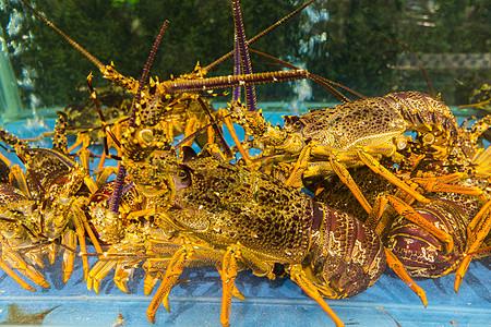 深海龙虾图片