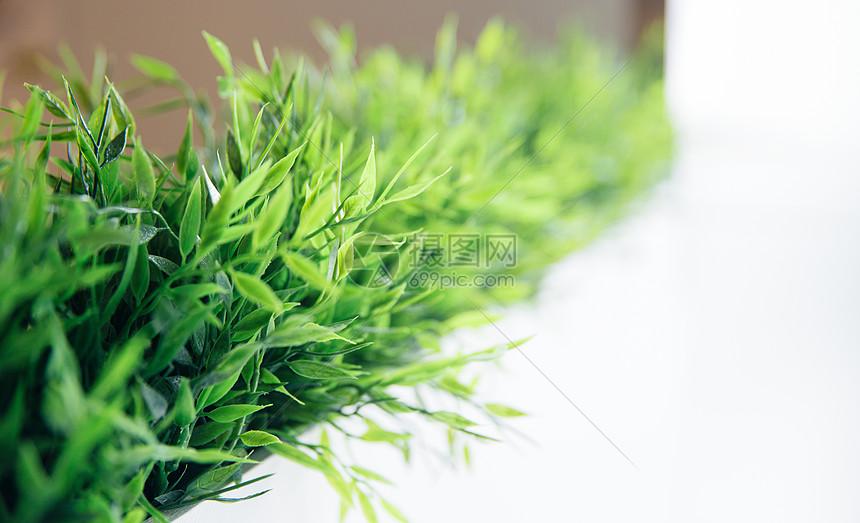 唯美图片 自然风景 清新绿色植物背景jpg  分享: qq好友 微信朋友圈 q