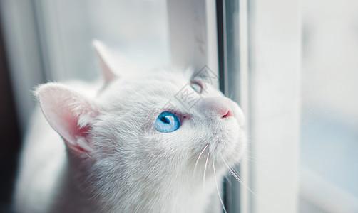 窗边的白猫图片