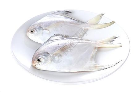 生鲜鲳鱼白底图图片