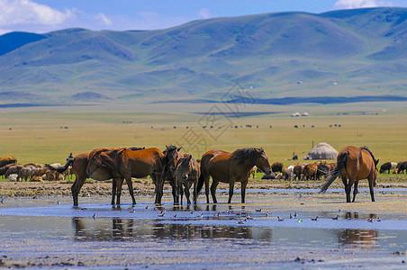 新疆湖泊牧场图片