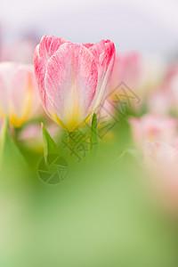 唯美梦幻的粉色花卉图片