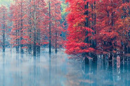 谷坦水库秋色杉树林美景图片
