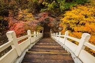 田沟桥国家森林公园桥头灿烂的枫叶图片