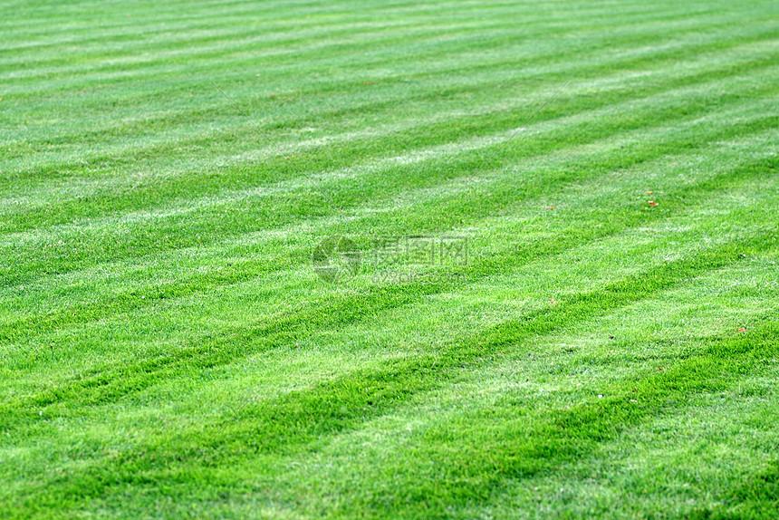 绿草地背景图片