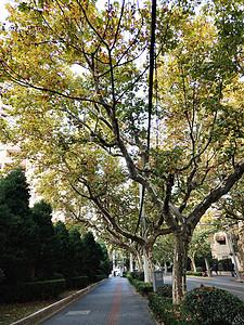 枫树人行道图片
