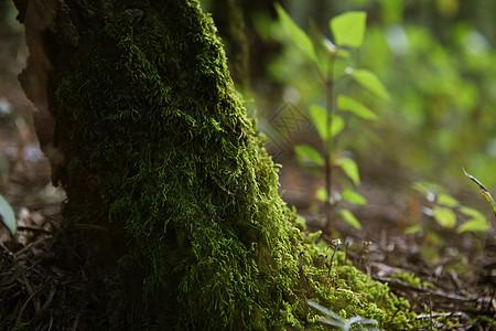 秋天里的树根图片