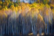 北疆秋色图片