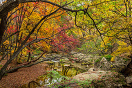 天桥沟国家森林公园秋色图片