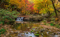 深秋森林公园里灿烂的红叶与溪水图片