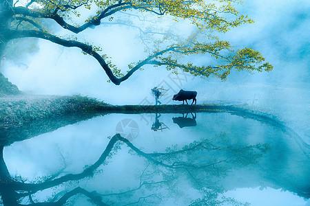 晨雾中辛勤劳动的农民和老牛图片