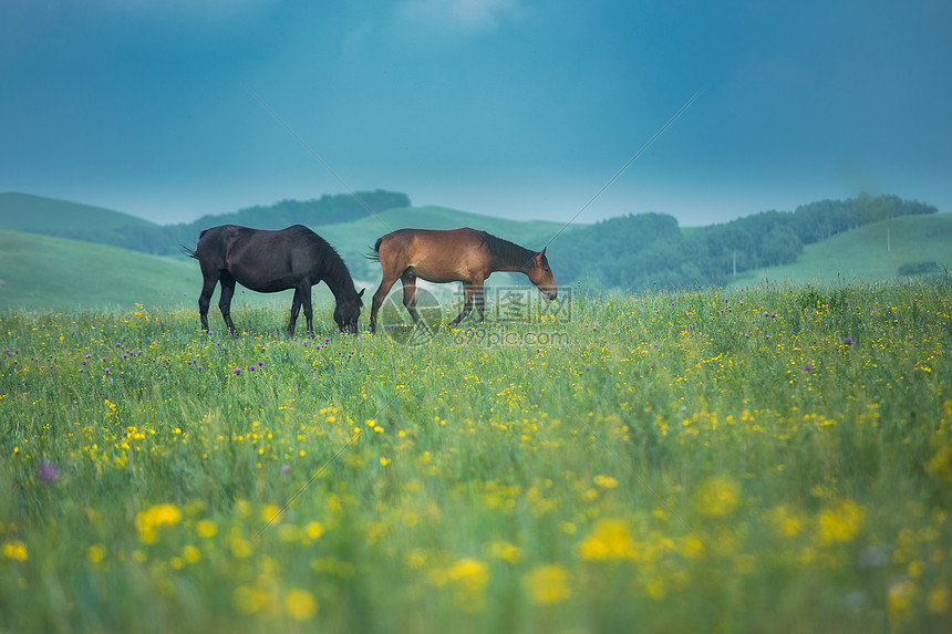 草原马图片