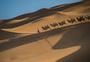 沙漠驼铃图片