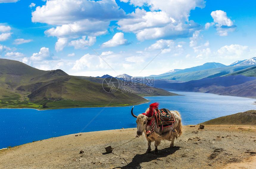 西藏西藏 天堂以上图片