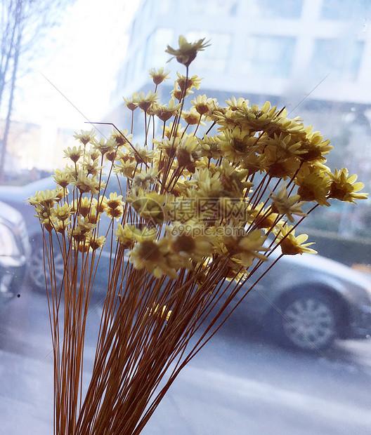 小雏菊干花花束真花风干图片素材_免费下载_jpg图片