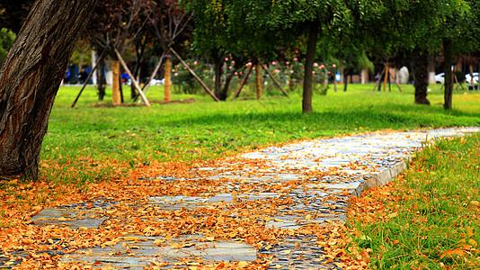 落满银杏叶的公园小道图片