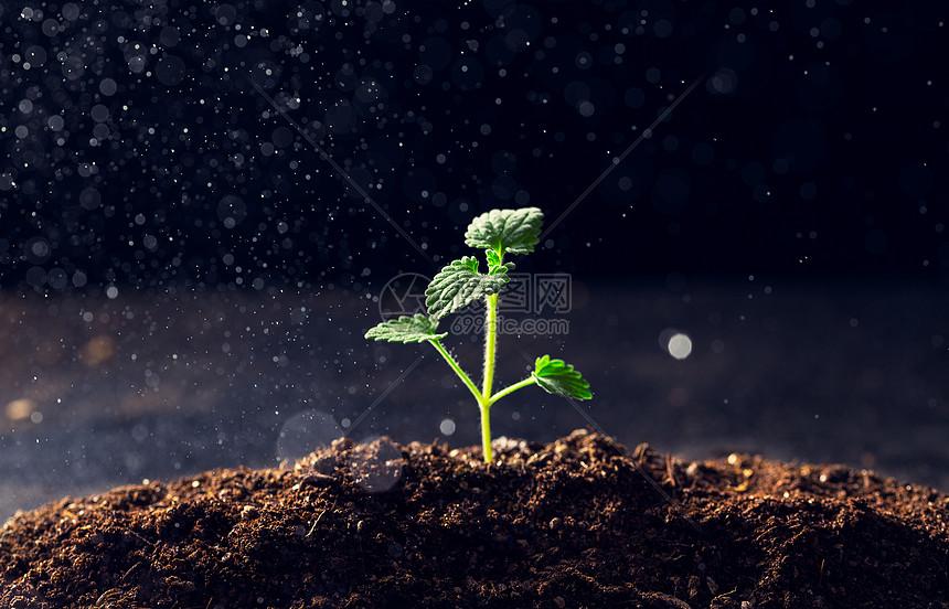 生长的植物图片