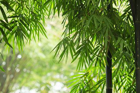 中国元素竹子图片