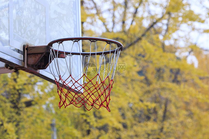 银杏树边的篮球场图片