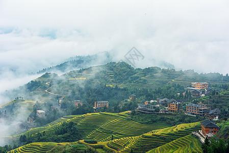 雾中的田园梯田古寨景色图片
