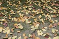 初冬的落叶图片