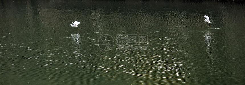 湖面上的飞鸟图片