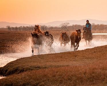 内蒙古坝上草原奔跑的马图片