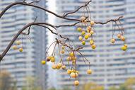 秋天的果实图片
