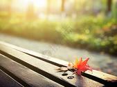 落在长椅上的红叶图片