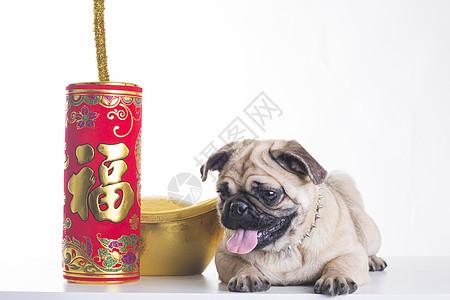 新年狗的照片图片