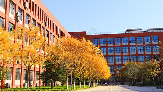 秋季校园的树图片