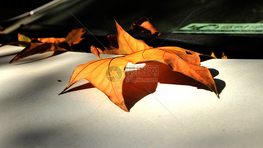 落在车上的枯叶图片