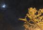 夜银杏图片