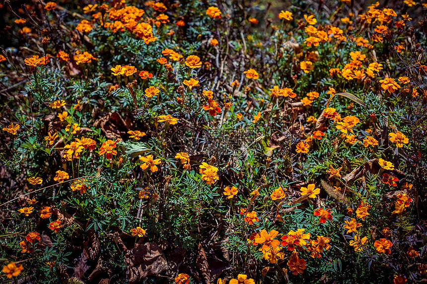 冬日里的野花图片