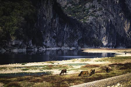 山边牛羊图片