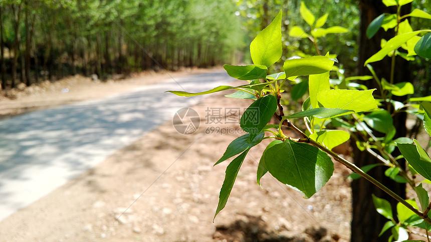 道路旁的树叶图片