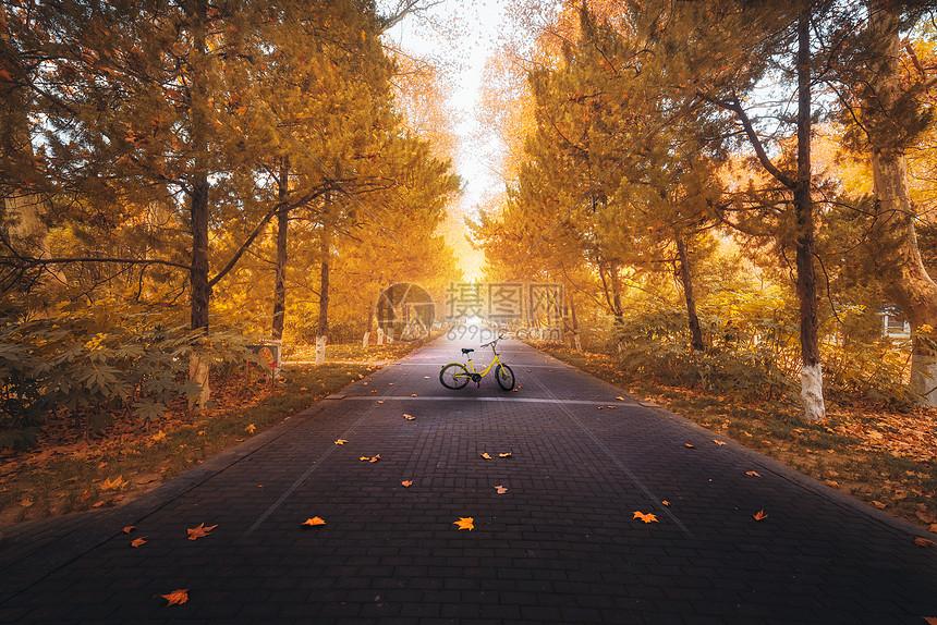秋季童话公园图片
