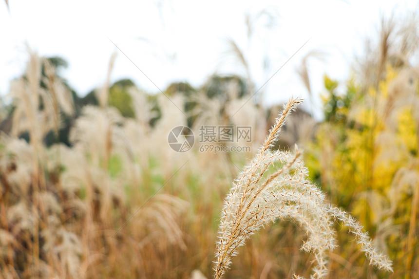 秋天的野草图片