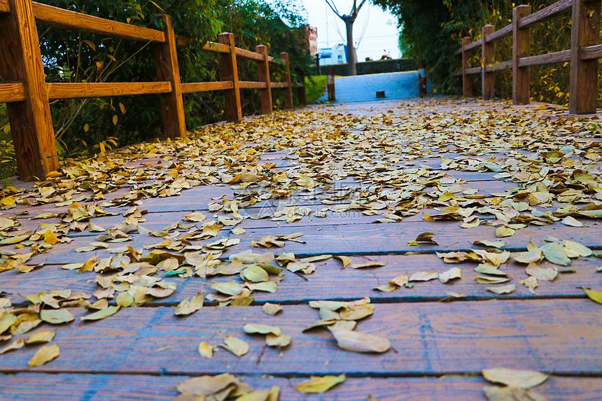秋季的落叶图片