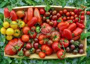 新鲜蔬果图片