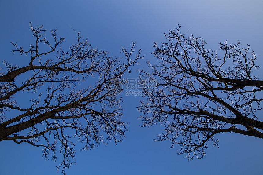 简约的干树图片