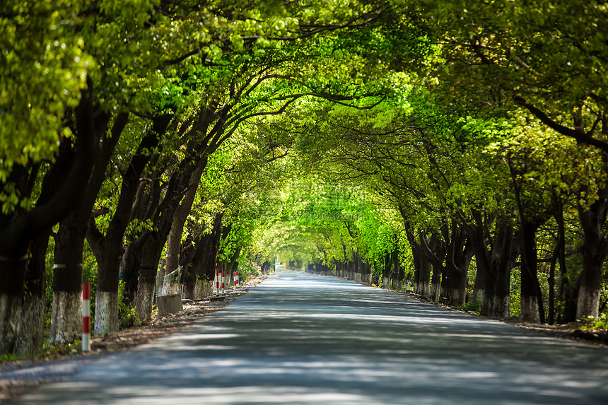 绿树成荫的道路图片
