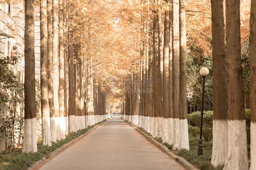 道路两边整齐的树图片