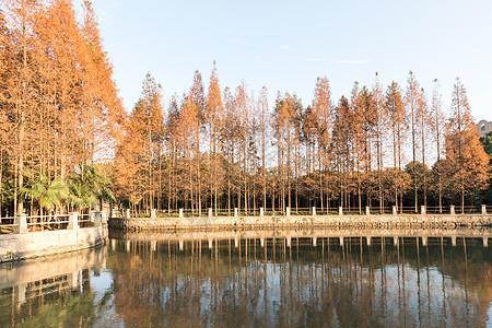 金色的秋天图片