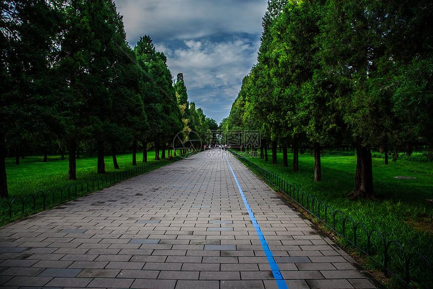 公园里的林间小路图片