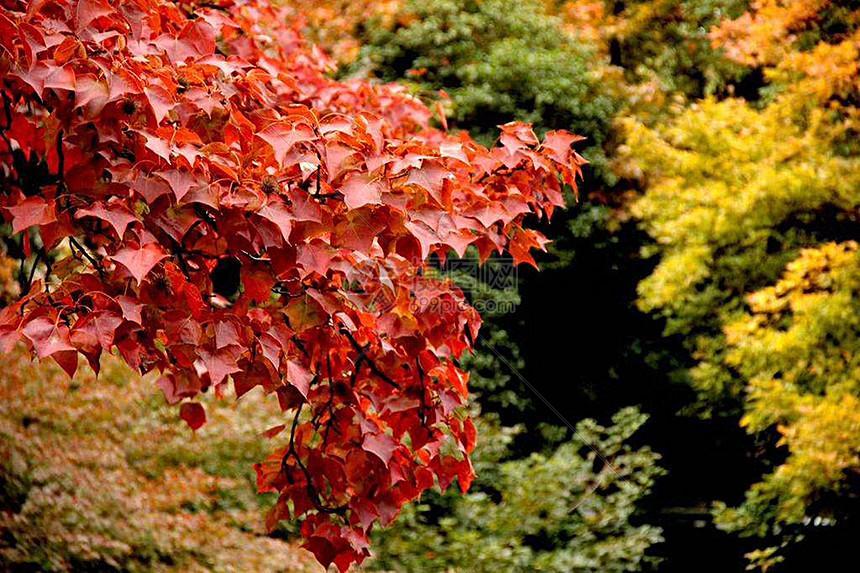 秋天里的叶子图片