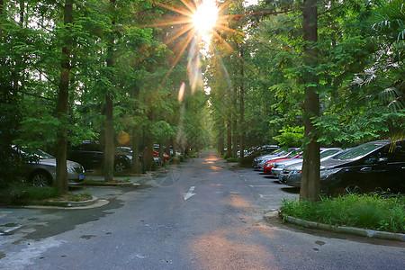 夏日森林阳光图片