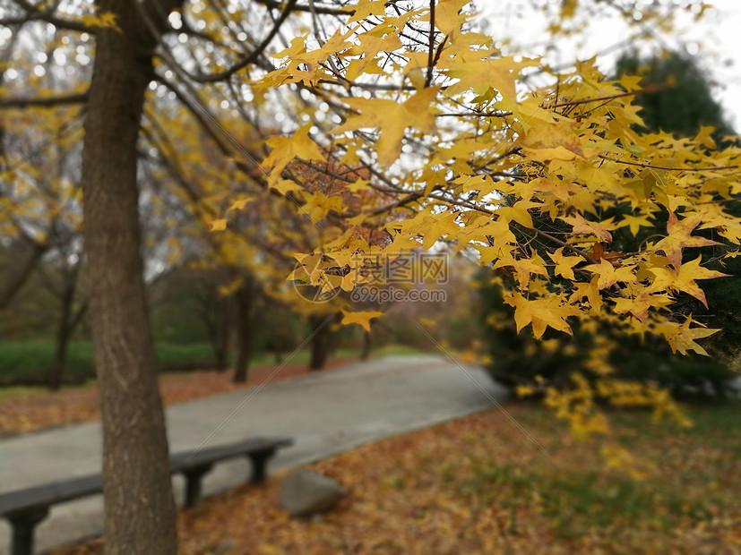 又一轮秋冬图片