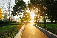 夕阳下的公园图片